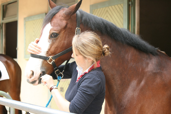 Taking a saliva sample from a performing horse at Saumur.