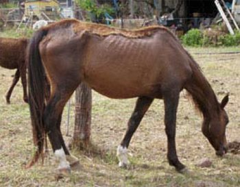 The above and below pictures were taken of the horses on November 5, 2012, the day they were seized.
