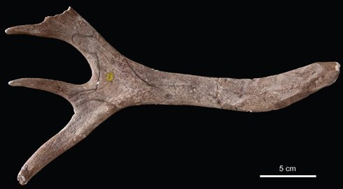 This reindeer antler from Neschers in France is engraved with a stylised horse. It was created by early humans and found between 1830 and 1848.