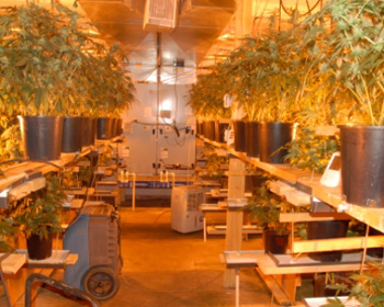 The marijuana growing operation in the bunker.