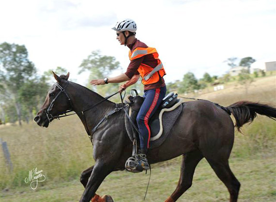 Brook Sample and Brookleigh Excalibur, the 2013 winner of the Tom Quilty ride at Kilkivan in Queensland in June. The win delivered Sampled his seventh Gold Cup win and his 12th buckle, in a time of 9 hours and 14 minutes. The combination previously won in 2012 at St Helens in Tasmania and in 2010 at Manilla in New South Wales.
