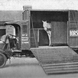 Trust remembers Britain's war horses
