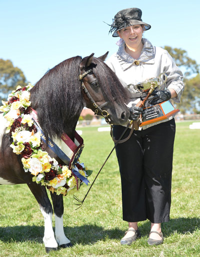 Shetland pony Otway View Eloise won the Best of Show Championship title at the  2014 Royal Melbourne Horse Show in Australia.