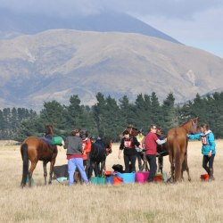 Strappers (grooms) and helpers at work.