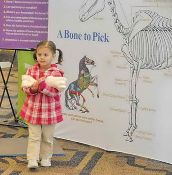The traveling display presented by The United States Pony Clubs offers numerous educational stations made of authentic equine components such as bones from a real horse and actual grooming and tack items.
