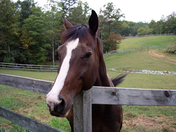 Buddy and other horses in South Carolina need to be vaccinated against Eastern Equine Encephalitis, West Nile Virus and rabies.