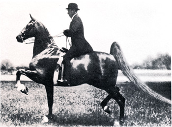 Chief of Spindletop, with Cape Grant up.