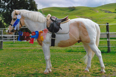 The well-performed Apache has returned to full health, and is back to teaching children to ride.