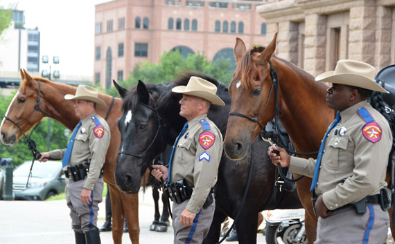 Ready for service: The three new horses to patrol the grounds of the Texas State Capitol stand quietly at the official launch of the new mounted unit.