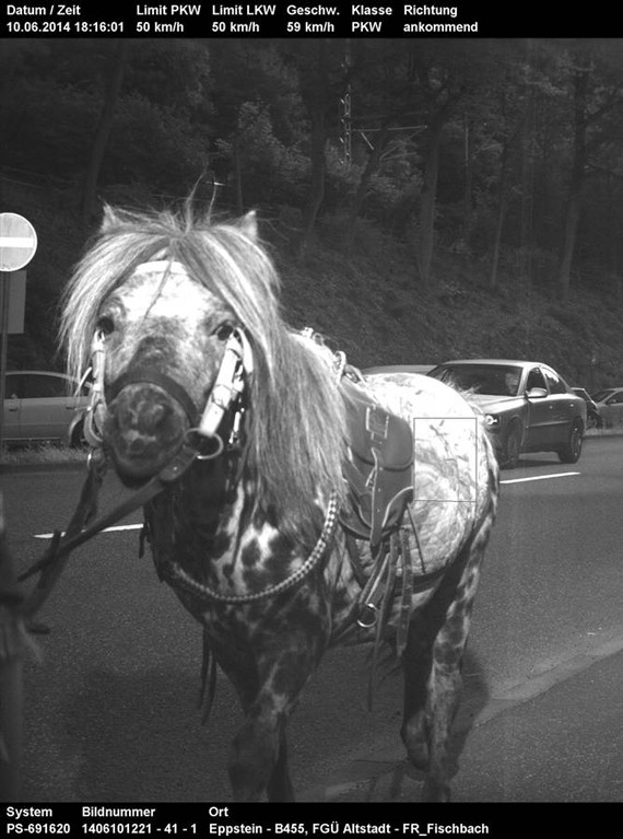 He's on the move, but certainly not at 59kmh. Photo: City of Eppstein, Germany