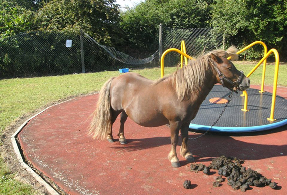 Mr Nibbles was found tied to a roundabout in a Gainsborough playground. Photo: Bransby Horses