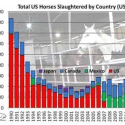 European Union ban threatens US horse slaughter pipeline