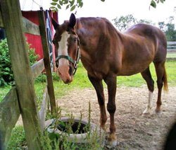 New Jersey equine wins Horse Personality of the Year Award