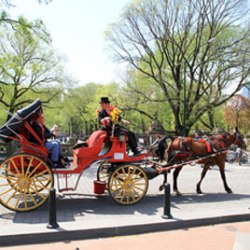 New York mayor's plan to reduce carriage trade in big trouble