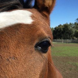 Gas gangrene occurred in horse after muscle injection