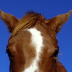 Conference to explore horses in the workplace and personal safety