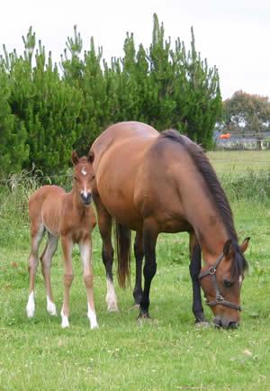Success! A healthy foal.