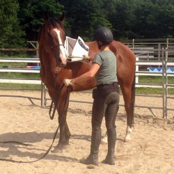 Reaching out to Truman: A horse's journey from fear to trust