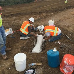 Californian earthworks reveal fossils of Ice Age horses and other animals