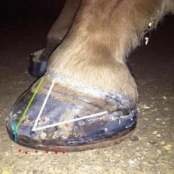 Leading experts for No Laminitis! Conference in US