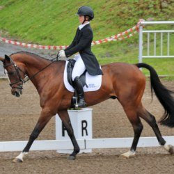The perks of being a dressage scribe