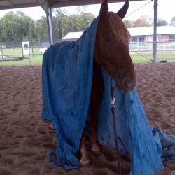 Police horse in Texas lost in tragic road accident