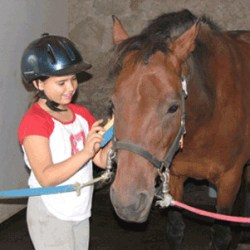 Equine therapy: What effect is there on horses?
