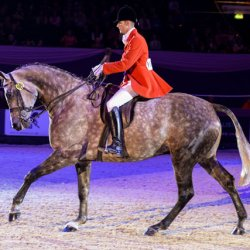 Riders, prepare your horses for this year's equine star search