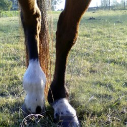 Opening the stable doors from lameness to soundness