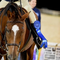 More chances for OTTBs to shine with added shows and awards