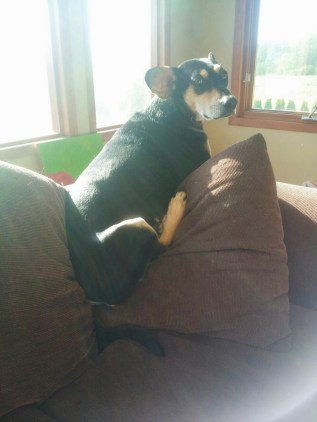 Kieffer & the Couch-2