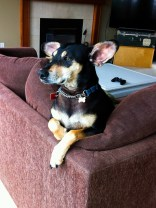 Kieffer & the Couch-5