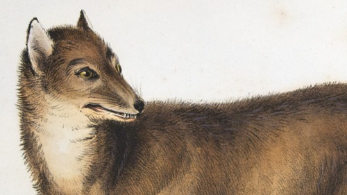Darwin's first and rarest work:  The Zoology of the Beagle (2/6)