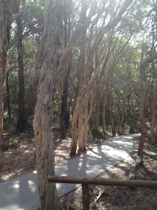 A track on the coastal bush track