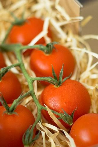 Ardmona trust tomatoes