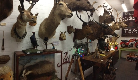 So much taxidermy