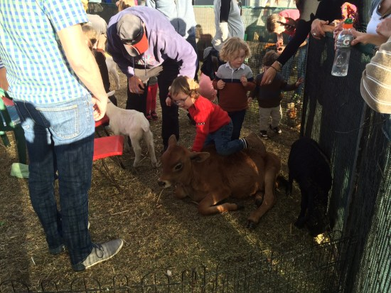 A little boy being too enthusiastic in the petting zoo