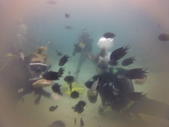 Plenty of fish life