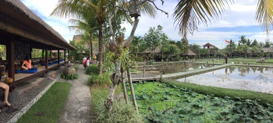 The scenic rice paddy