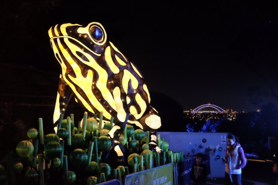 A corroboree frog - poisonous!