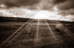 Hay fields in morning light