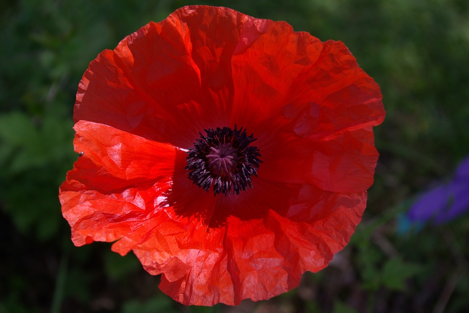 Poppies and Scotland's new media.
