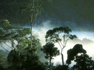 hutan tropis indonesia