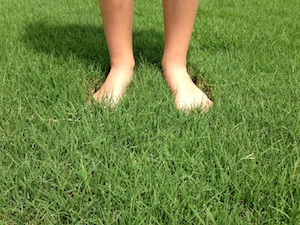 Why Pick Tifway 419 Bermuda Sod Houston Grass South