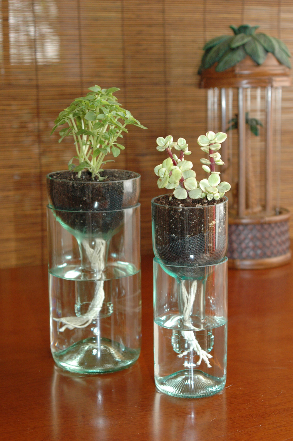 Self-watering planter made from recycled bottles…clever clever.
