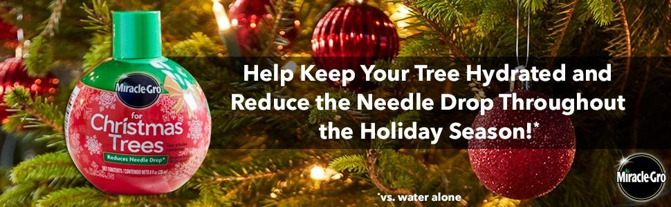 How keep your Christmas tree fresh longer.