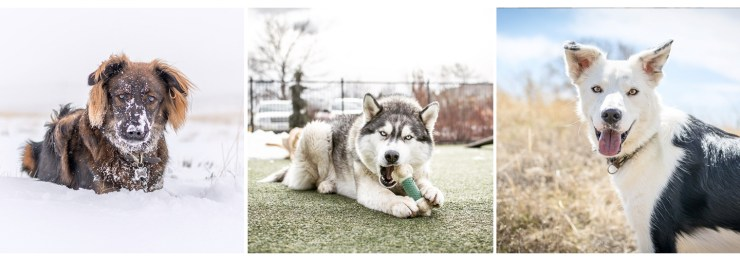 Wyo Pet Photos   How Far From Home