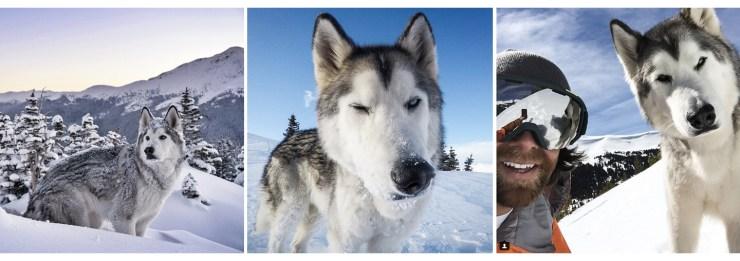 Loki The Wolfdog   How Far From Home