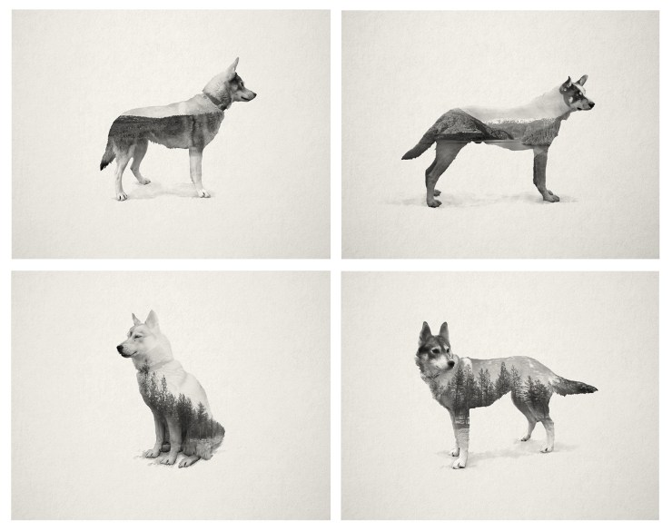 Ghost Dogs by Stevo Dirnberger | How Far From Home