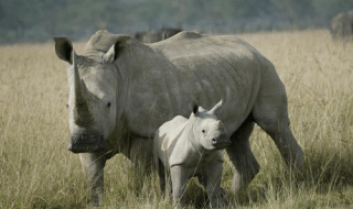 Save-the-Rhino